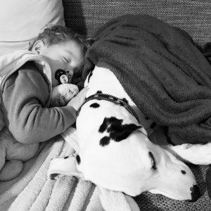 Alf konnte nicht schlafen und kam ins Wohnzimmer auf die Couch um mit unserer Dalmatinerhündin Emma zu kuscheln