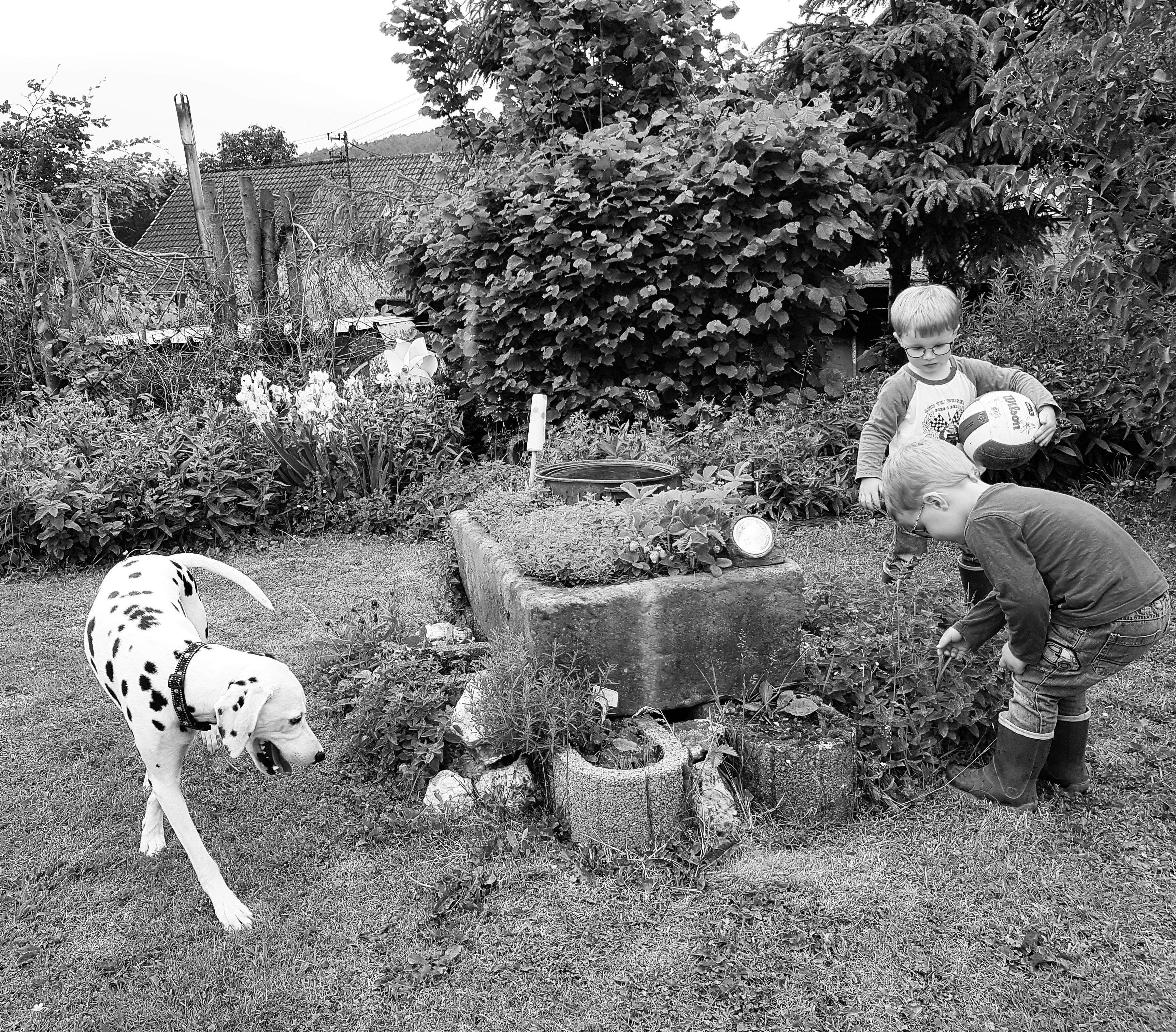 Spinnen Im Garten: Zwillinge Und Hund