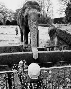 Zoo Hagenbeck, Alf füttert die Elefanten