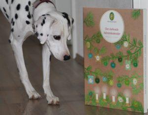 Unsere Dalmatiner Hündin Emma betrachtet den duftenden Adventskalender von Primavera Life